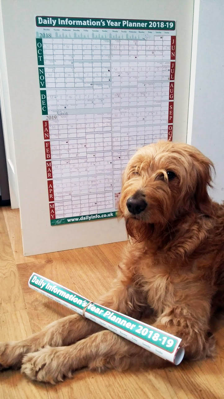 Photo of year planner on wall with dog